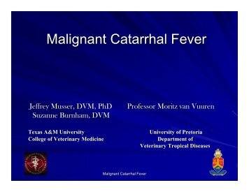 Malignant Catarrhal Fever - College of Veterinary Medicine - Texas ...