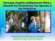 Almaciga (Agathis philippinensis Warb.): Valuable But Diminishing ...