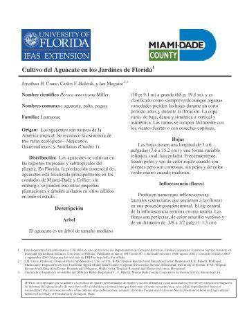 Cultivo del Aguacate en los jardines de Florida - Miami-Dade ...