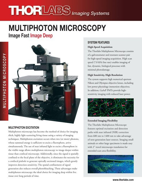 MULTIPHOTON MICROSCOPY - Thorlabs
