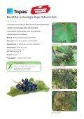 Ratgeber Weinbau - Seite 3
