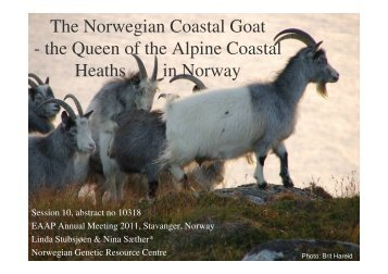The Norwegian Coastal Goat - the Queen of the Alpine Coastal ...