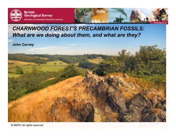 The Charnwood Fossils