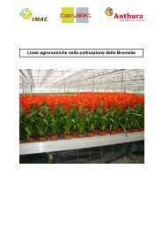Manual Bromelia ITA - Anthura