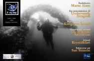 Island - X-Ray Magazine