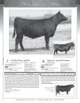 95 Registered Angus Lots…175 Head plus Embryos - A Cross Ranch - Page 4