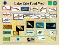 Lake Erie Food Web - Middle Bass Island