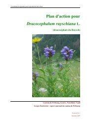 Plan d'action pour Dracocephalum ruyschiana L.