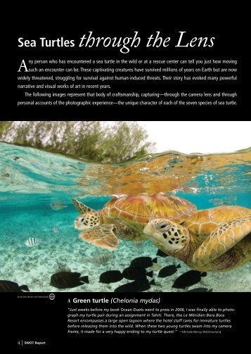 Sea Turtles through the Lens - The State of the World's Sea Turtles