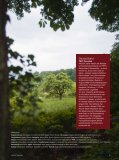 oder englisch CLT: Cross Laminated Timber - Stora Enso - Seite 5