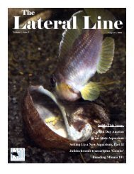 Lateral Line August 2004-1.pub - Hill Country Cichlid Club