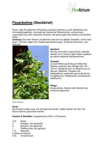 Steckbrief Feuerbohne - Gartenfreunde Bremen