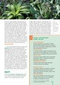 i Aussaat- und Pflanzzeiten - Seite 3