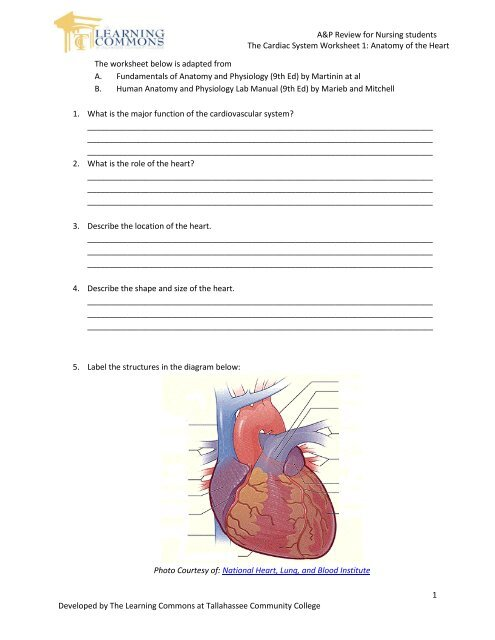 A&P Review for Nursing students The Cardiac System ...