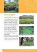 The lantana profile - Weeds Australia - Page 2