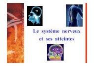 Le système nerveux - SDIS14