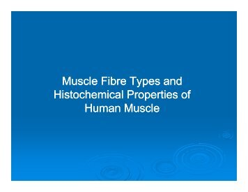Muscle Fibre Types and Muscle Fibre Types and ... - BluWiki