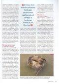 Tortugas invasivas del mediterràneo - aMasquefa - Page 4