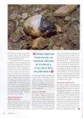 Tortugas invasivas del mediterràneo - aMasquefa - Page 5