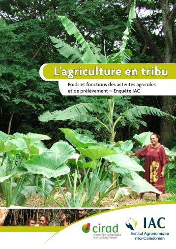 L'agriculture en tribu - Chambre d'Agriculture de Nouvelle Calédonie