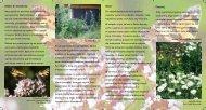 Ogródki przyjazne owadom. - Ogród Botaniczny