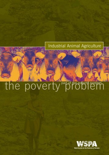 Industrial Animal Agriculture – Part of the Poverty ... - Pig Business