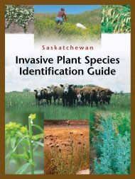 Invasive Plant Species Identification Guide - Saskatchewan Forage ...