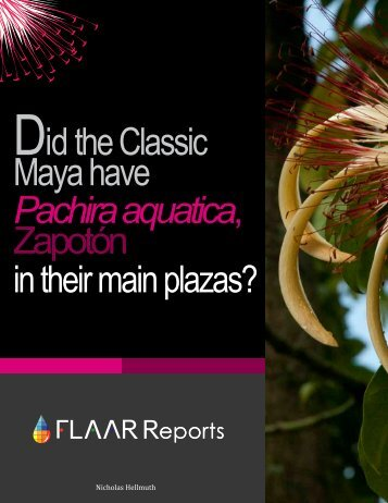 Did the Classic Maya have Pachira Aquatica Zapotòn
