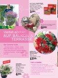 s mmer hallo - Gartencenter Fahr Dornstetten - Seite 2