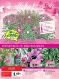 s mmer hallo - Gartencenter Fahr Dornstetten - Seite 7