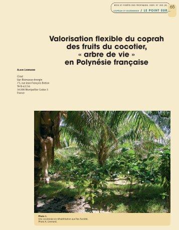 en Polynésie française - Bois et forêts des tropiques - Cirad