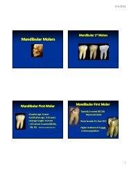 Mandibular Molars [Compatibility Mode].pdf