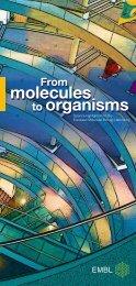 From molecules to organisms - EMBL Monterotondo