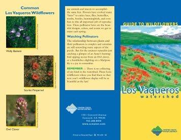 Guide to Los Vaqueros: Wildflowers