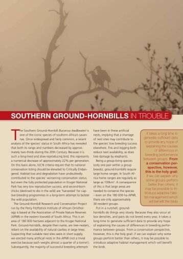 Southern Ground-Hornbills in trouble - Percy FitzPatrick Institute of ...