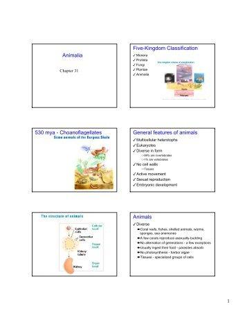 Image of: Plantae Kingdom Animalia Worksheet Rockcafe Images Of Animalia Classification rockcafe