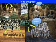 Eco Animal Aula Vida em grupo 2013.pdf
