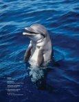 Reporte de Delfines, CAMBIOS2.indd - Page 2