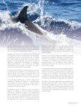 Reporte de Delfines, CAMBIOS2.indd - Page 7