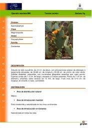 Opuntia maxima Mill. Tunera común - Interreg Bionatura