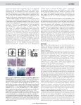 shackleton 2006 - Page 4