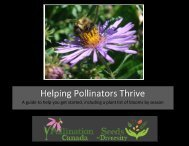 PLANTS FOR BEES OVER OUR SEASONS