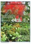 Dawn Chorus - Tiritiri Matangi - Page 7