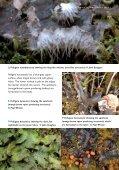 23155_Peltigera:ascophyllum leaflet - Plantlife - Page 7