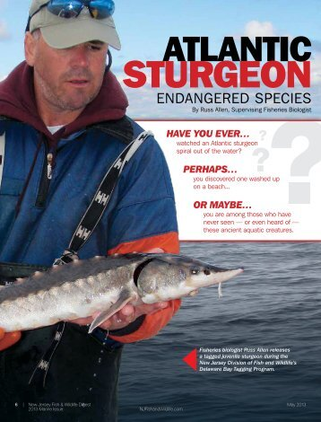 Atlantic Sturgeon - Endangered Species - Division of Fish and Wildlife