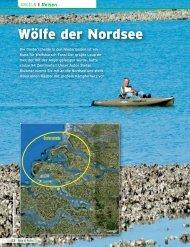 Wölfe der Nordsee - Wolfsbarsch.com