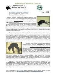 Artrogriposis multiple Angus 2009 - Reproducción Animal