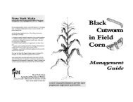Black Cutworm in Field Corn Management Guide - New York State ...
