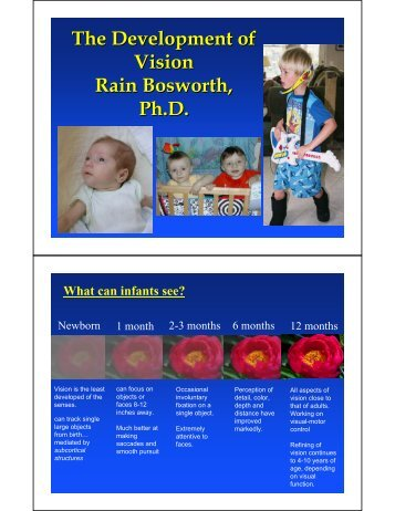 The Development of Vision Rain Bosworth, Ph.D.