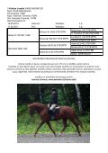Ypäjällä 8.9.2012 NUORTEN HEVOSTEN ... - Ratsujalostusliitto - Page 5
